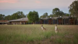 Wildman Wilderness Lodge - Sydney Tourism